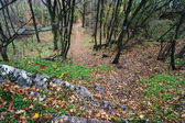 Hiking trail in the autumn deciduous forest — Stock Photo