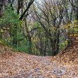 Stock Photo: Hiking trail with strewn leaves in autumn forest