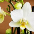 Nice yellow orchid — Stock Photo