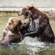 Two brown bears fighting in the water — Stock Photo