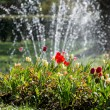 Beautiful tulips and fountain — Stock Photo #46192829
