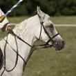 Stock Photo: Horse during historical reenactment
