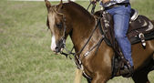 Koni během show — Stock fotografie