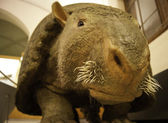 Glyptodon representation in a museum — Stock Photo