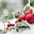 Christmas balls — Stock Photo #15000183