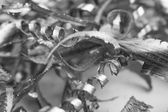 Silver Metal Scrap — Stock Photo