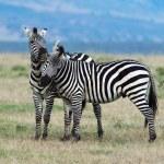 thumbnail of Plants Zebras