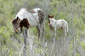 Wild horse mother and son — Stock Photo