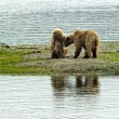 Stock Photo: Two brown bears cubs playing