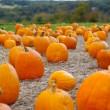 Pumpkins — Stock Photo
