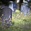 Graveyard — Stock Photo #41616597