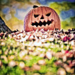 Halloween Pumpkin — Stock Photo #41616871
