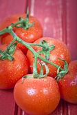 Tomaten — Stockfoto