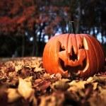 Pumpkin in woods — Stock Photo #8421646