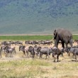 African elephant and herd of wildebeest — Stock Photo #28011991