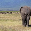 African elephant and herd of wildebeest — Stock Photo #28012589