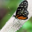 Butterfly on a rope — Stock Photo #39885949