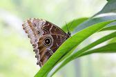Borboleta-coruja em uma folha — Fotografia Stock