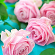 Pink roses — Stock Photo #13171229