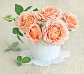 Rosas frescas — Foto Stock