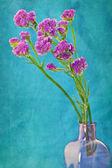 Purple flowers — Stock Photo