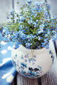 Forget-me-not bloemen — Stockfoto
