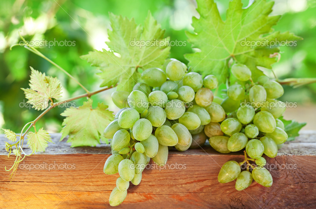 Green grapes in a garden on a sunny day.  — Stock Photo #13581817