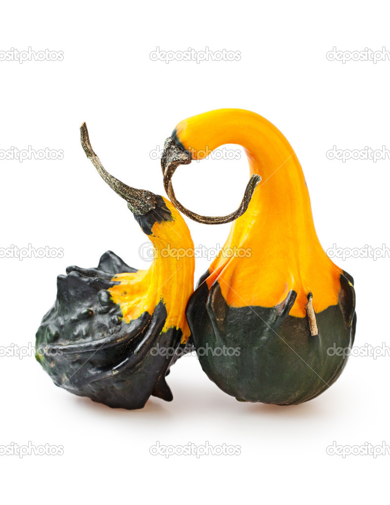 Two fun decorative pumpkins on a white background  Stock Photo #13597524