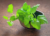 Lemon balm herb — Stock Photo