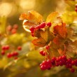 Autumn abstract background. — Stock Photo
