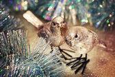 Christmas card. — Stok fotoğraf