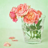 Beautiful fresh roses — Stockfoto