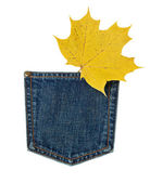 Maple leaf and jeans — Stock Photo