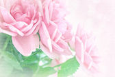 Květinové pozadí. — Stock fotografie
