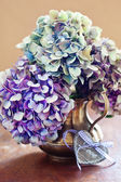 Purple hydrangea flowers — Stock fotografie