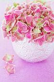 Květy růžové hortenzie — Stock fotografie