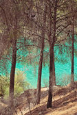 Lake with a turquoise water — Stock Photo
