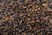Gunpowder tea — Stock Photo