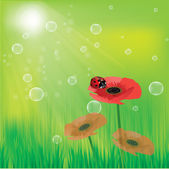 Vector illustration of poppies on a green background and ladybird — Stock Vector