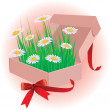 Gift daisies in an open box, vector illustration — Stock Vector