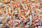 Shellfish in a market — Stock Photo