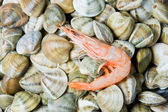 Shellfish in a market — Stock Photo