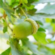 Acorn with leaves — Stock Photo #35342263