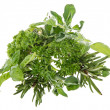 Heap of fresh Herbs isolated on white - Stock Photo