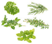 Different Herbs isolated on white — Stock Photo