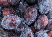 Heap of Plums with water drops — Stock Photo