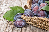 Basket filled with fresh Plums — Stock Photo