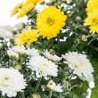 White and Yellow flowers (Chrysanthemum) — Stok fotoğraf