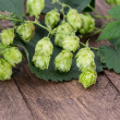 Stock Photo: Hop (Humulus lupulus)