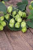 Hop (Humulus lupulus) — Stock Photo